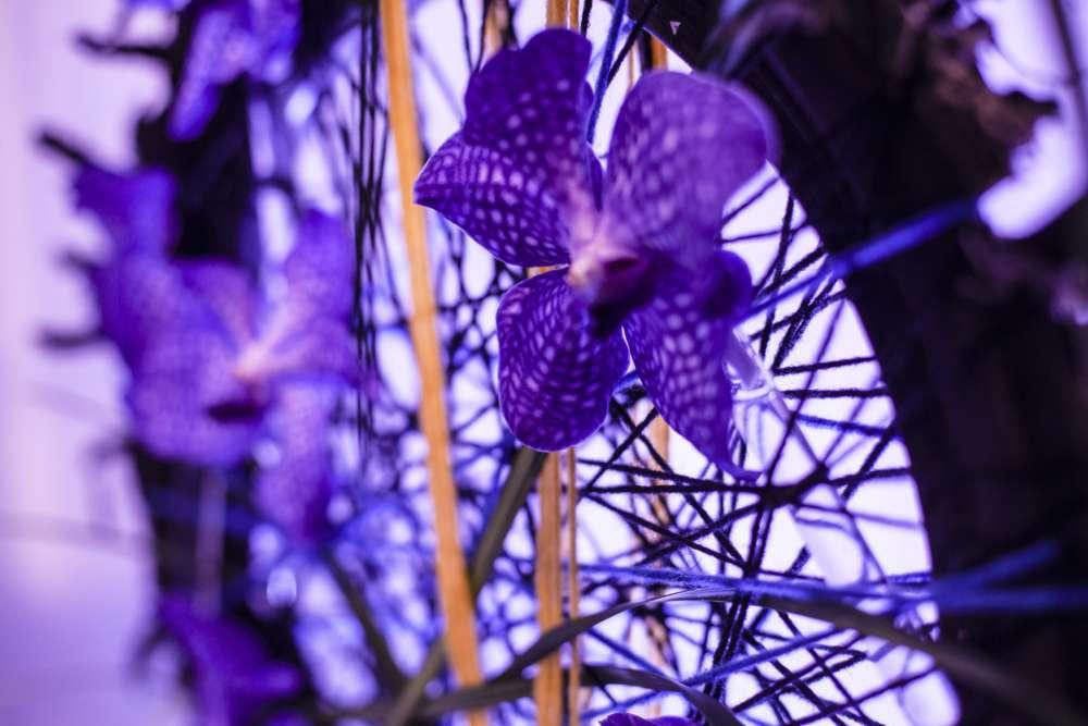 Snaga cvjetne umjetnosti je i u boji