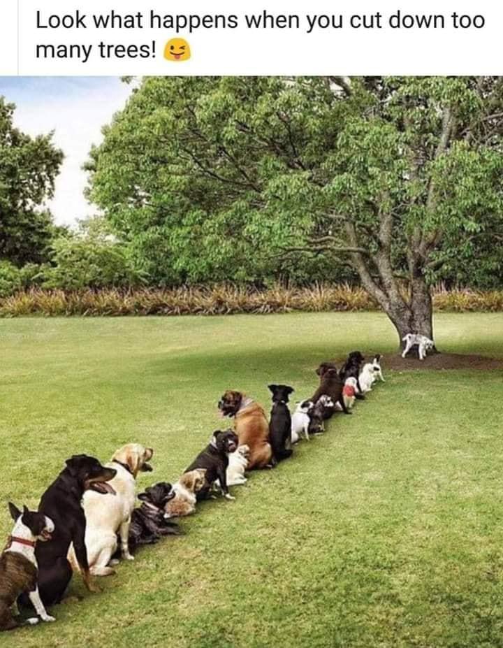 drvo šala