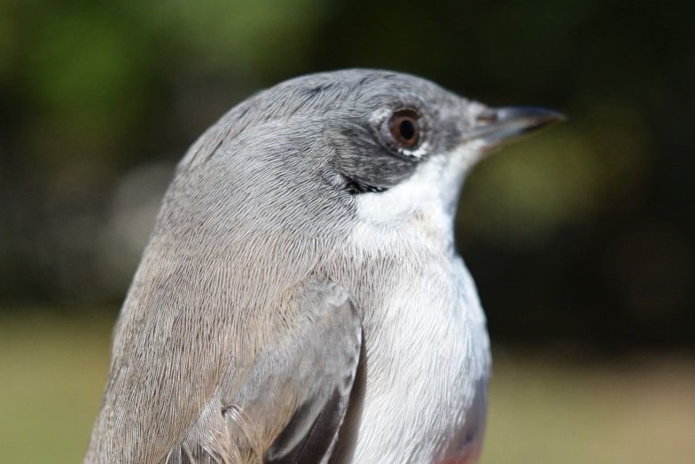 Ornitološki kamp Učka (1)
