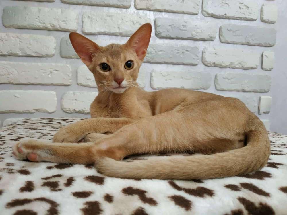 Mladi maca maca slike