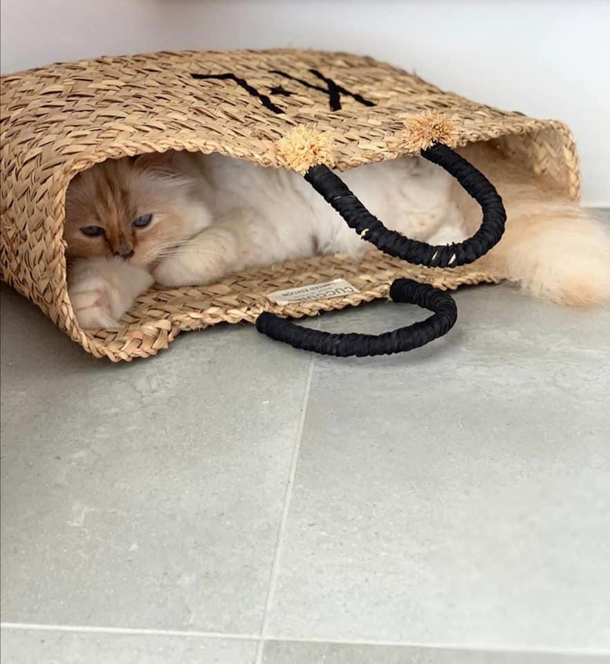 maca karl1