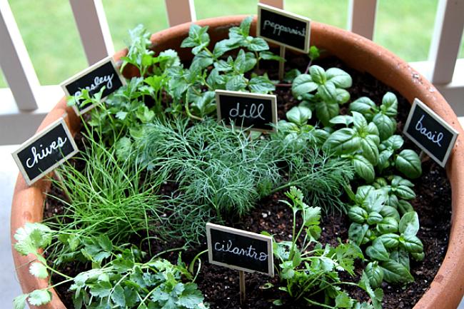 mini začinski vrt
