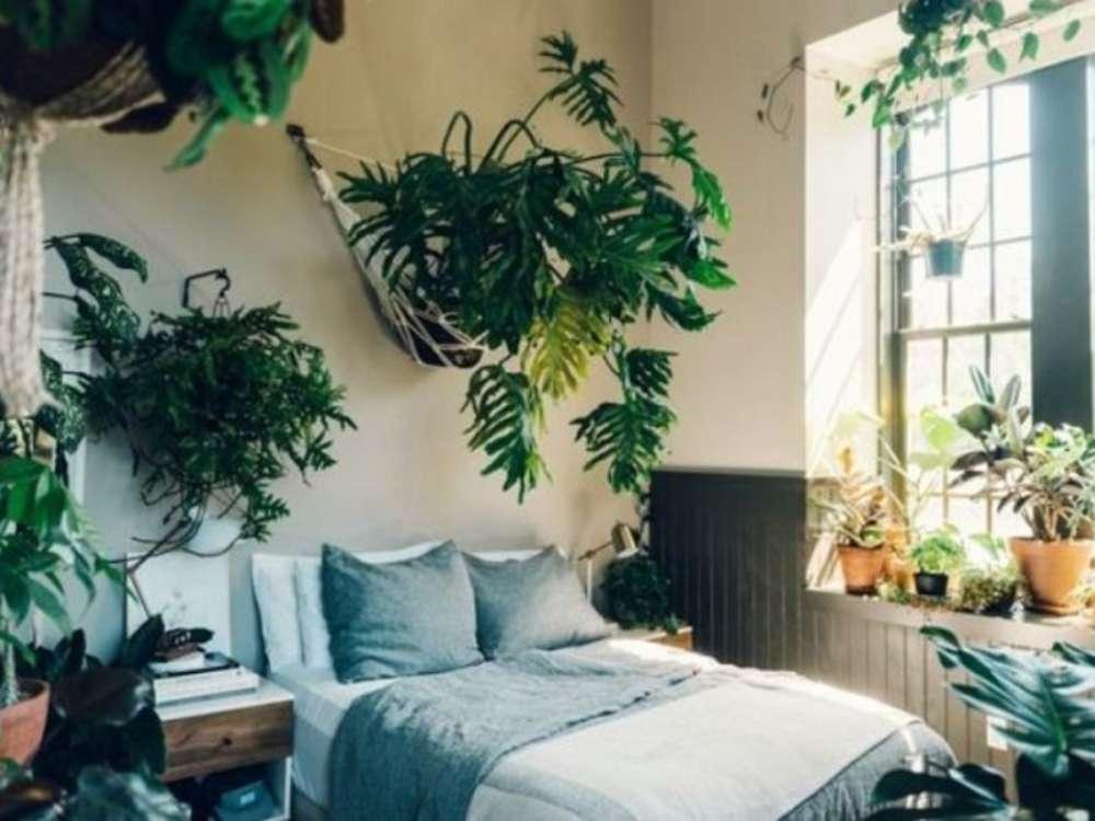 Bedroom-Plants-Ideas-feature-1200×900
