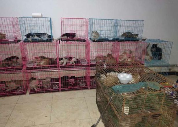 0_stolen-cats-are-crammed-into-rusty-cages (1)