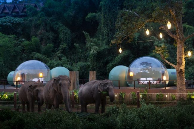 you-can-sleep-with-elephants-under-the-stars-in-a-jungle-bubble-in-thailand1-650×433