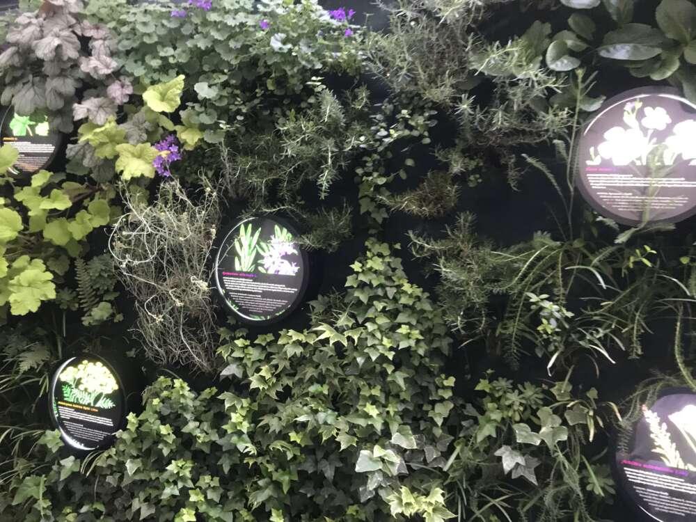 Na samom ulazu kao uvod u priču nalazi se Hortus sanitatis – vertikalni vrt ozdravljenja s ljekovitim biljem2