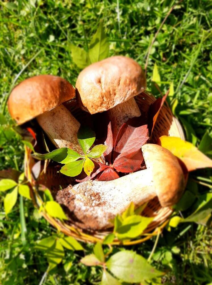 Goranske gljive 2